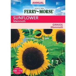 Ferry-Morse Sunflower Mammoth Seeds-X6544 - The Home Depot   The Home Depot
