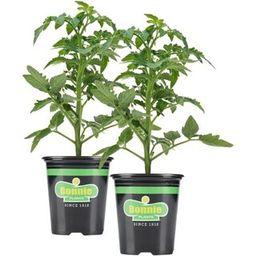 Bonnie Plants 19.3 oz. Better Boy Tomato Plant (2-Pack)-2P0201 - The Home Depot | The Home Depot