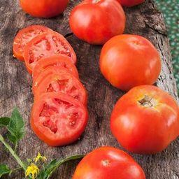 Bonnie Plants 19.3 oz. Rutgers Tomato Plant-0217 - The Home Depot | The Home Depot