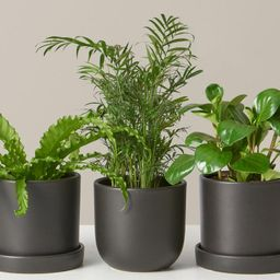 Pet Friendly Plant Subscription | The Sill