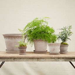 Bergs Palace Pot | Anthropologie (US)