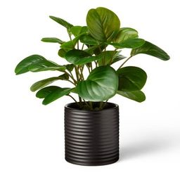 """10"""" x 6"""" Artificial Peperomia Obtusifolia Plant in Ribbed Ceramic Pot Black -  Hilton Carter for ... 