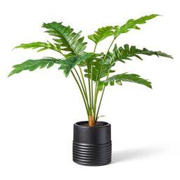 "32"" x 32"" Alocasia Portora Plant in Ribbed Pot Black - Hilton Carter for Target | Target"