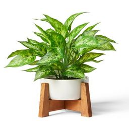 """14"""" x 10"""" Faux Philodendron Birkin Plant with Wood Stand Planter White - Hilton Carter for Target 
