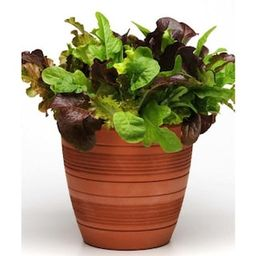 Bonnie Plants 19.3 oz. Gourmet Salad Mix Plant-0059 - The Home Depot | The Home Depot