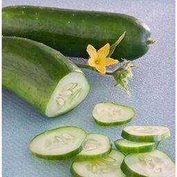 Bonnie Plants 19.3 oz. Burpless Bush Cucumber Plant-4201 - The Home Depot | The Home Depot