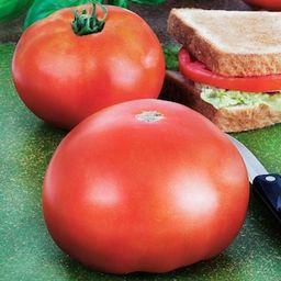 Bonnie Plants 19.3 oz. Park's Whopper Tomato Plant-0206 - The Home Depot | The Home Depot