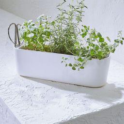 Indoor/Outdoor Herb Planter with Scissors + Reviews | Crate and Barrel | Crate & Barrel