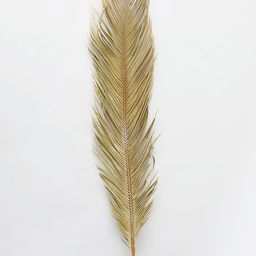 """Dried Natural Cycas Palm - 30-36"""" Tall 