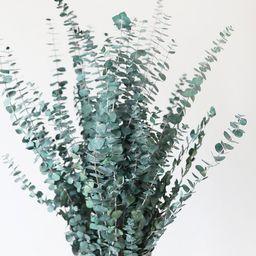 "Green Preserved Spiral Eucalyptus - 28-30""   Afloral (US)"