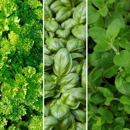 Cottage Farms Direct Herb Garden Tuscan Trio 2.5 in. Pots Parsley-Oregano-Basil Plants (3-Piece) | The Home Depot