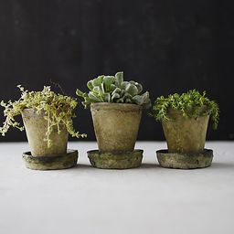 Earth Fired Clay Herb Pot + Saucer, Set of 3 | Terrain