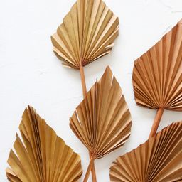 Pack of 5 - Dried Mini Palm Spears in Terracotta Orange   Afloral (US)