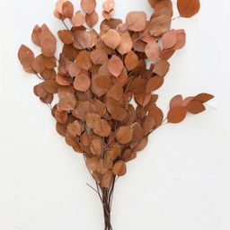 """Terra Cotta Preserved Silver Dollar Eucalyptus - 24-30"""" Tall 