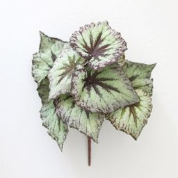 """Purple Green Artificial Begonia Leaves Bush - 9"""" Tall 