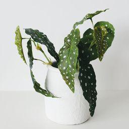 "Artificial Angel Wing Begonia Leaf Plant - 12"" | Afloral (US)"