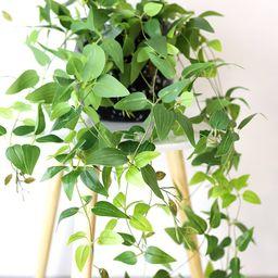 "Artificial Plants Hanging Tradescantia Houseplant - 41"" Long | Afloral (US)"