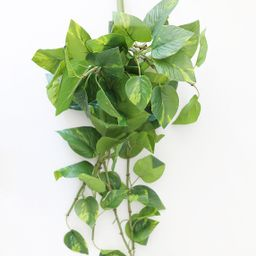"""Real Touch Hanging Pothos House Plant - 22"""" 