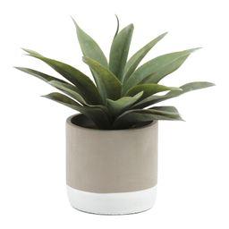 Aloe In Dip Cement Pot   TJ Maxx