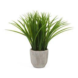 Grass In Vertical Grain Pot   Plants & Planters   Marshalls   Marshalls