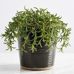 Faux Potted String of Fishhooks Plant | Pottery Barn (US)