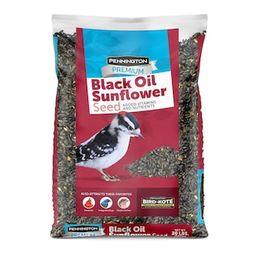 Pennington 20 lbs. Premium Black Oil Sunflower Bird Seed-100542057 - The Home Depot | The Home Depot