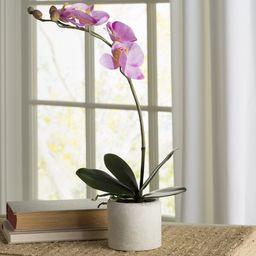 Artificial Orchid Floral Arrangement in Pot   Wayfair Professional