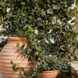 Large Terracotta Vase | H&M (US)