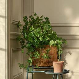 Terracotta Plant Pot | H&M (US)