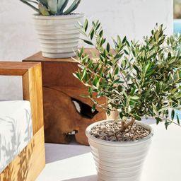 Large Terracotta Plant Pot | H&M (US)