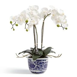 Orchid Potted Plant in Ming Vessel   Frontgate