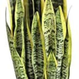 Artificial snake Plant 26 inches Fake Sansevieria Artificial potted Plants for Indoor and Outdoor... | Amazon (US)