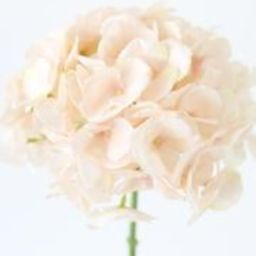 """Oversized Artificial Hydrangea in Blush - 9"""" Bloom 