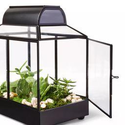 "10"" x 9"" Iron/Glass House Terrarium Planter Black - Hilton Carter for Target | Target"
