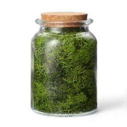 Preserved Moss Decorative Filler Green - Hilton Carter for Target | Target