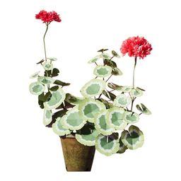 The Green Vase Geranium Plant   Chairish