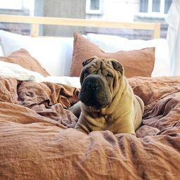 Linen duvet cover, Tobacco bedding, Linen bedding, Pure linen duvet, Duvet cover king, Duvet cove...   Etsy (US)