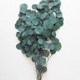 """Preserved Silver Dollar Eucalyptus - 22-30"""" Tall 