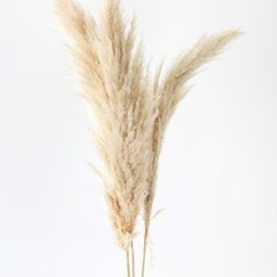 """Pack of 3 - Fluffy Dried Pampas Grass in Tan - 40-42"""" 