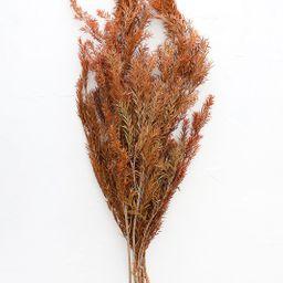 "Terracotta Preserved Melaleuca Bracteata Leaf Bundle - 20-28"" Tall | Afloral (US)"