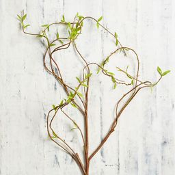 Faux Curling Willow Branch, Green | Pottery Barn (US)
