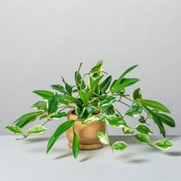"""7"""" Mini Faux Hoya Potted Plant - Hearth & Hand™ with Magnolia 