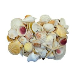U.S. Shell Light Shell Mix with Starfish Gift Pack | Michaels Stores