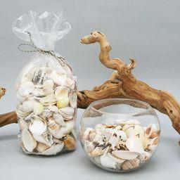 Mixed Shell Vase Filler, Large - White | Pottery Barn (US)