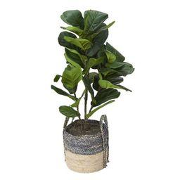 Fiddle-leaf Fig Plant in Basket | Frontgate | Frontgate
