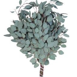 Fresh Silver Dollar Eucalyptus Bundle | Macys (US)