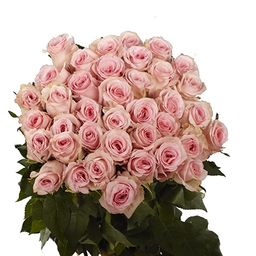 Pink Roses- 50 Fresh Flowers- Beautiful Gift- Next Day Delivery | Amazon (US)