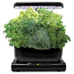 Miracle-Gro AeroGarden Harvest with Gourmet Herbs Seed Pod kit - Black | Target