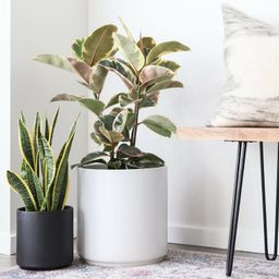 Peach & Pebble Modern Porcelain Pot Planter | Wayfair Professional