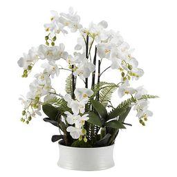 White Orchids in Round White Ceramic Dish | Kirkland's Home